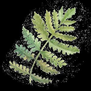 [Image: leaf-3-300x300.png]